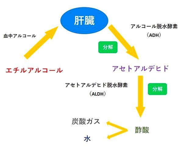 アルコール分解表